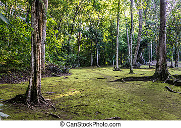 Tropical Jungle Forest, traveling through Tikal Park,...