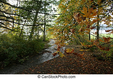 Autumn Trees - Autumn trees with changing leaves along a...