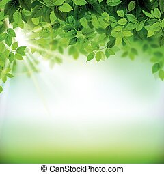 fresh green leaves - Summer branches with fresh green leaves...
