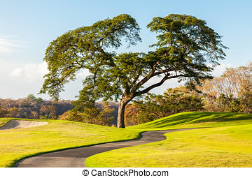 Costa Rica - Large Kapok tree on golf course in Costa Rica.