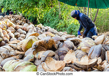 Farmer cutting coconut shell for processing agricultural...