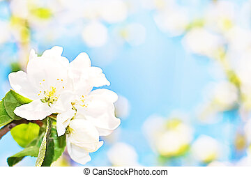abstract background of spring flowers