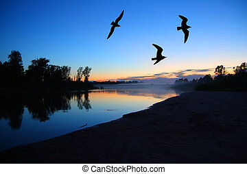 river dusk landscape with gulls after sunset