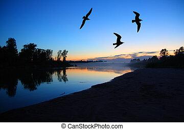 río, anochecer, paisaje, Gaviotas