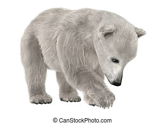 Polar Bear - 3D digital render of a cute polar bear isolated...