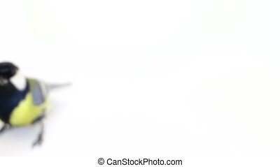 Abstract bird bird movement on a white background - Blurred...