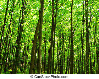green forest - Trees in a  green forest in spring