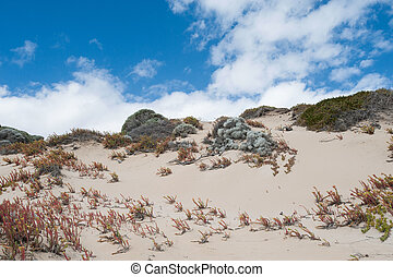 Struggling Against the Invader - soft seaside sand dune with...