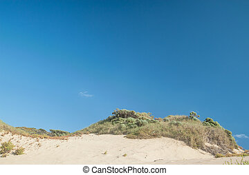 The Crest of the Dune - Patch of blue-green shrubs and...