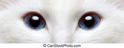 white cat\'s blue eyes