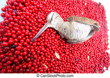 hunting scene, bird with red berries - woodcock, covered...