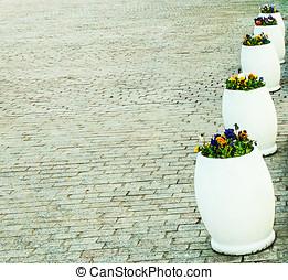 flowerbeds - violets flowerbeds