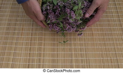 fresh healthy oregano wild marjoram medical flowers on table...