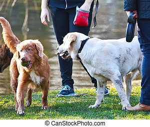 Playfull dogs by the pond