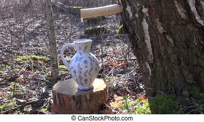 spring birch sap drops in jug - spring birch sap drops in...