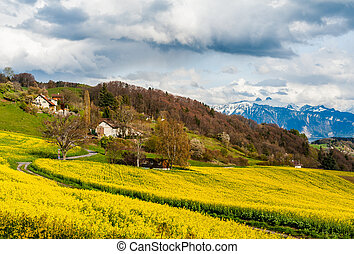 Beautiful spring landscape with raps field, dramatic sky and Alps