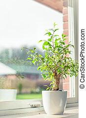 Green tree in a window