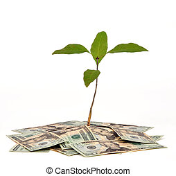 Money Tree - Plant on a pile of money on a white background