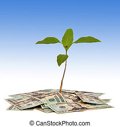 Money Tree - Plant on a pile of money with blue sky in...