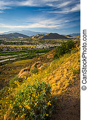 Flowers and view of distant mountains and valleys from Mount...