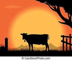 cow - silhouette of the cow in the countryside in the sunset