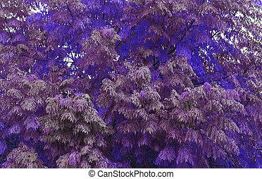 purple vegetation - Creative design of purple vegetation