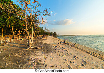 Wild beach - Tropical sea , wild beach. Gili Trawangan,...