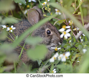 Wild Rabbit Eating A Flower
