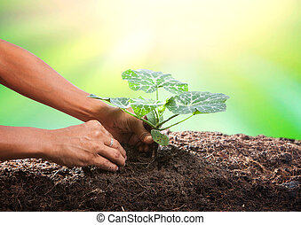 conceptual of hand planting tree seed on dirty soil against...