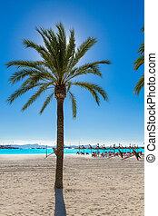 Platja de Alcudia beach in Mallorca Majorca - Platja de...