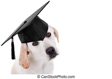 Graduation Graduate Dog - Graduation graduate puppy dog in...
