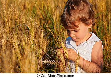 Little girl sits in wheat field