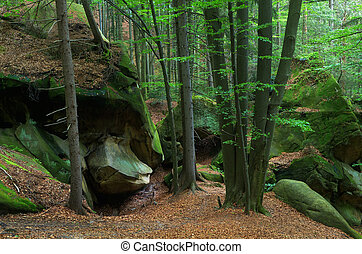 Woodland scenery - Rocks covered with moss in the forest...