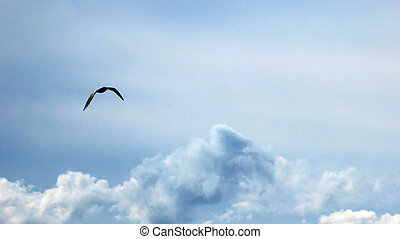 flying seagull - Picture of a flying seagull over the clouds...