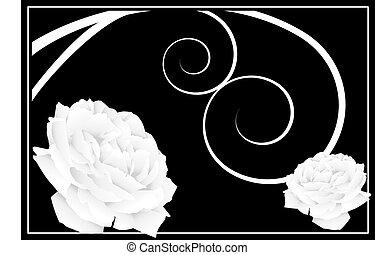 White Rose Drawing