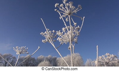 beautiful winter hoarfrost