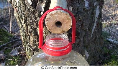 healthy  spring birch sap drops