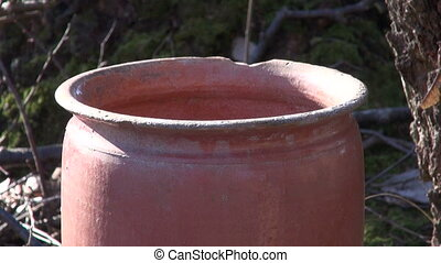 spring birch sap drink drops