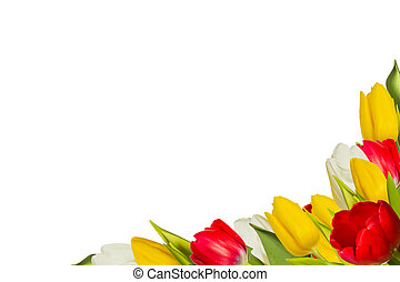 Tulips - Frame of tulips of different colors on a white...