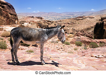 Donkey - A Donkey stands in front of the ancient ruins of...