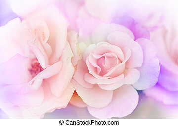 Pink rose background,Flower blur background