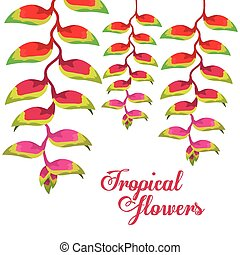 Tropical flowers design, vector illustration