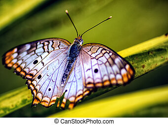 small butterfly - Close up of an Small Butterfly