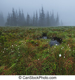 bog - small bog in foggy meadow