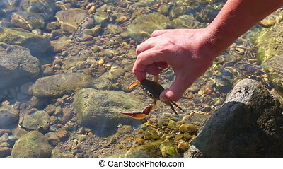 Crab - Man releases the crab in to water