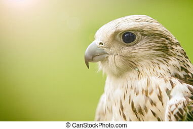hawk on green background