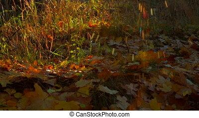 Spider Web In Autumn Wood