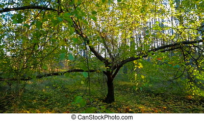 Autumn Forest In Bright Colors Tracking Shot - Tracking shot...