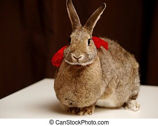 Brown bunny with a bow - A brown bunny with a red bow
