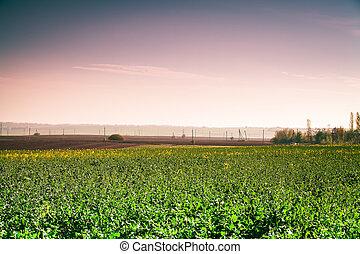 Green grass under blue sky